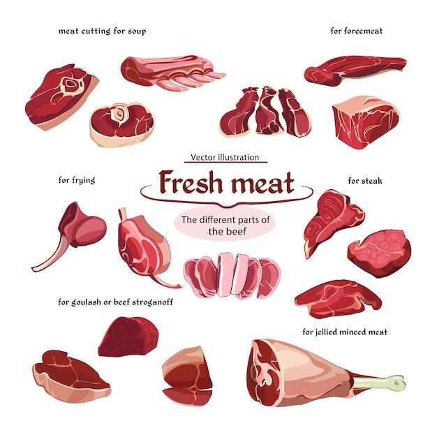 Colección de piezas de carne de res de corte de croquis vector gratuito