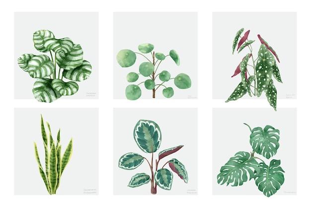 Colección de plantas dibujadas a mano aisladas sobre fondo blanco vector gratuito