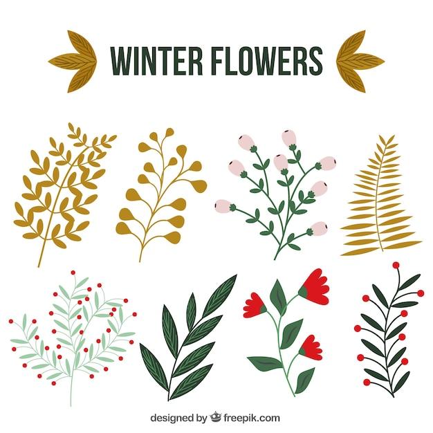 Colección de plantas de invierno con bonitas hojas | Descargar ...