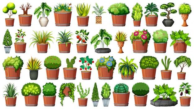 Colección de plantas en macetas en blanco vector gratuito
