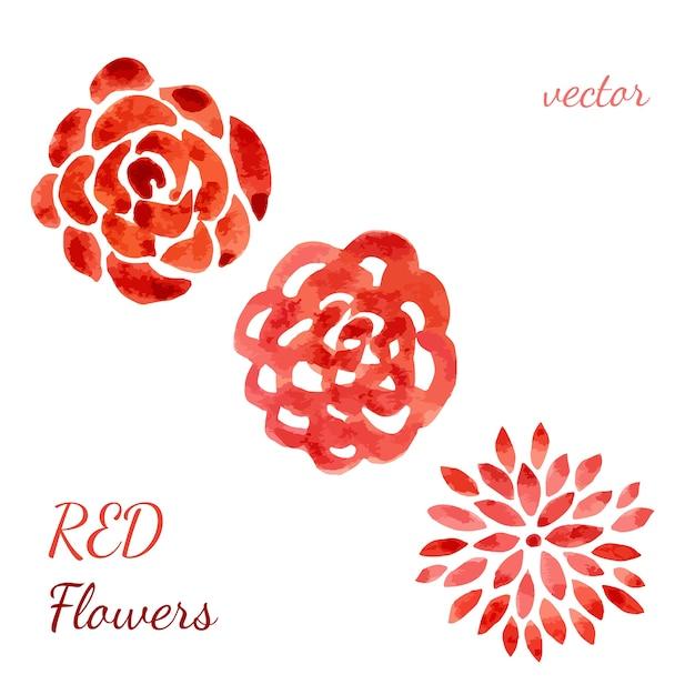 Colección de rosas de acuarela. conjunto de flores. vector ...