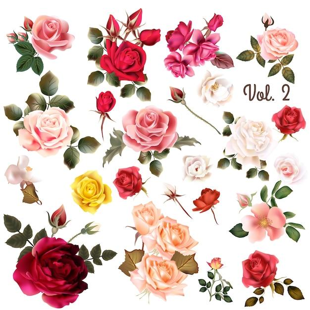 Colección de rosas a color Vector Premium