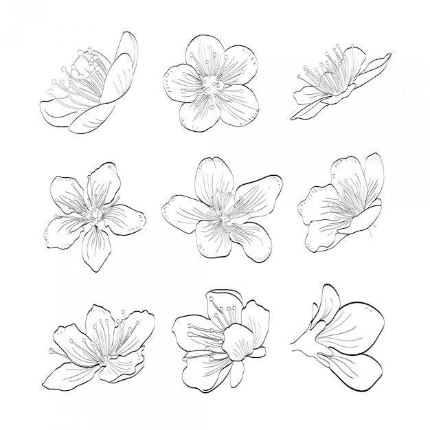 Colección sakura dibujada a mano Vector Premium