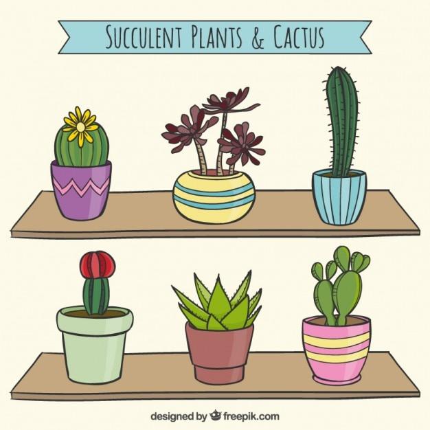 Colección suculenta de cactus | Descargar Vectores gratis
