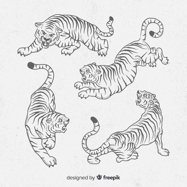 Colección de tigres dibujados a mano vector gratuito