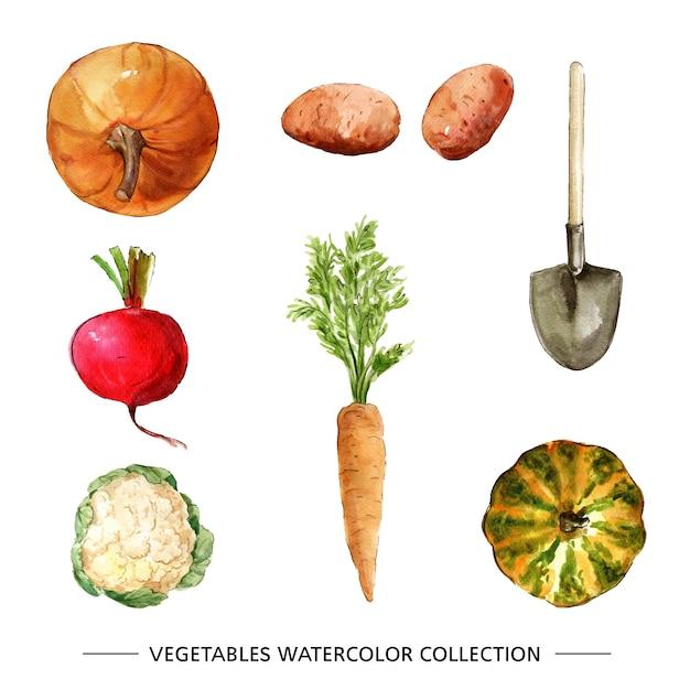 Colección de vegetales con acuarela vector gratuito