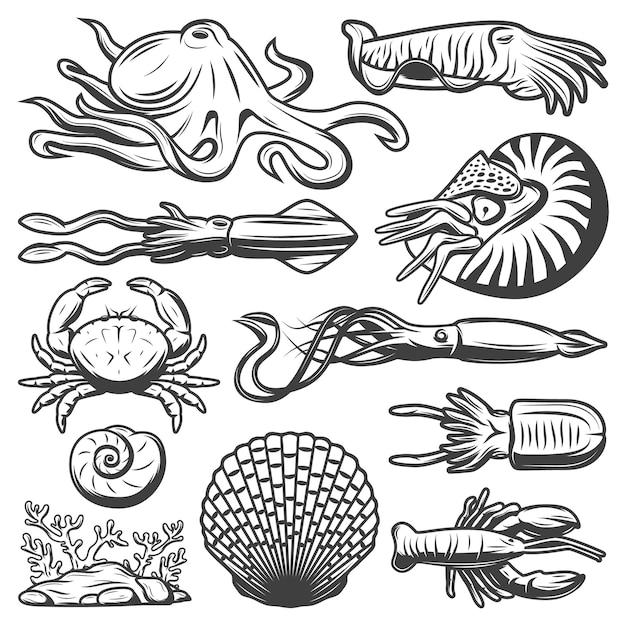 Colección de vida marina vintage con pulpo camarón calamar sepia cangrejo langosta algas gambas conchas marinas aisladas vector gratuito