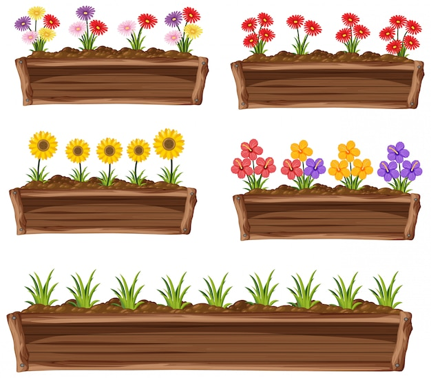 Coloridas flores en maceta de madera sobre fondo blanco. Vector Premium