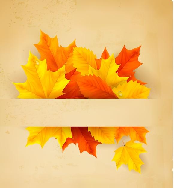 Coloridas hojas de otoño en un papel viejo fondo de regreso a la escuela Vector Premium