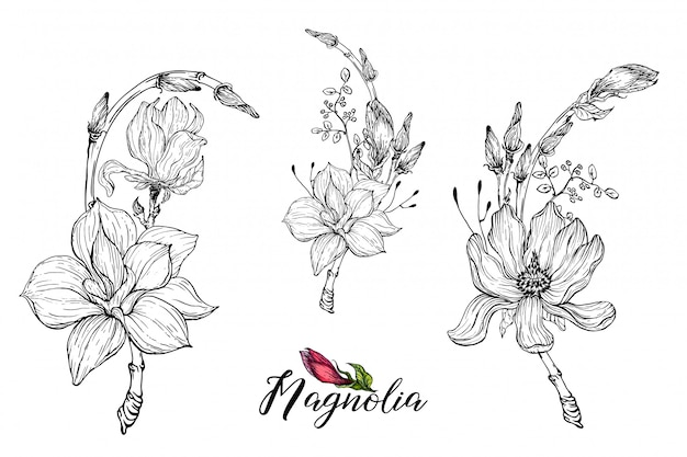 Composición con flores de magnolia Vector Premium