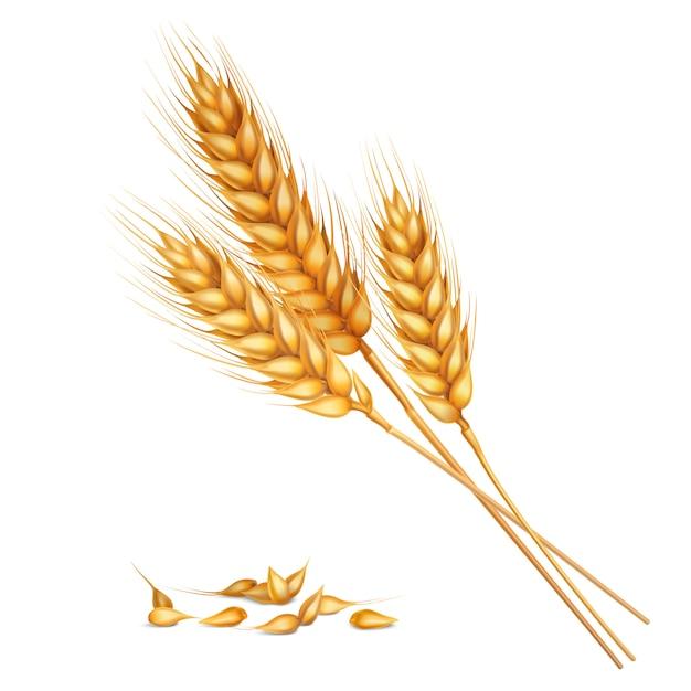 Composición realista de trigo vector gratuito