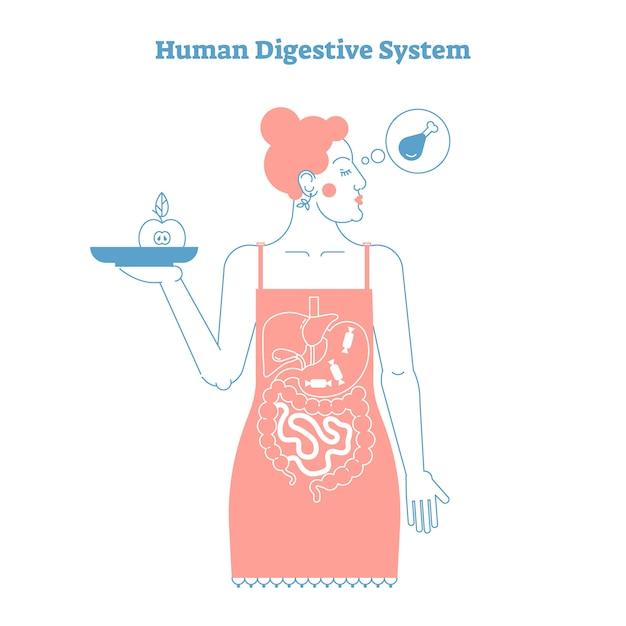 Concepto de anatomía del sistema digestivo humano Vector Premium