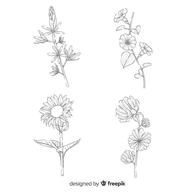 Concepto de dibujo realista de la colección de flores. vector gratuito
