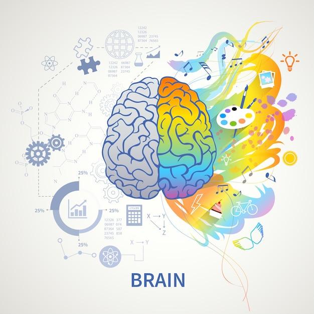 Concepto de funciones cerebrales representación simbólica infográfica con lógica del lado izquierdo ciencia matemática artes correctas creatividad vector gratuito