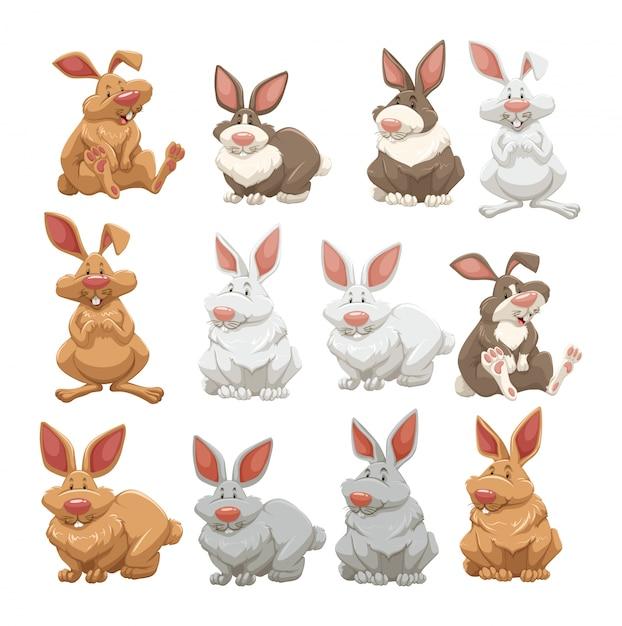 Conejos con diferentes colores de piel | Descargar Vectores Premium