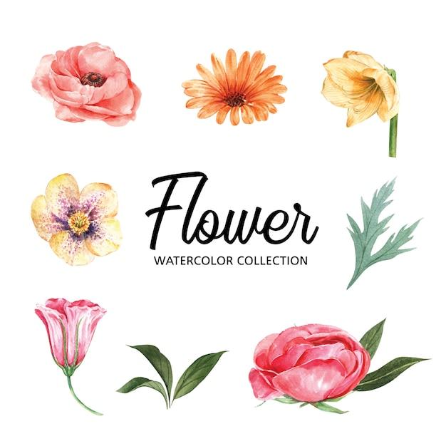 Conjunto de acuarela colorida flor y follaje, ilustración de elementos aislados vector gratuito