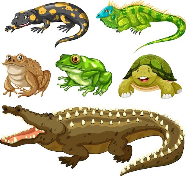 Conjunto de animal reptil. vector gratuito
