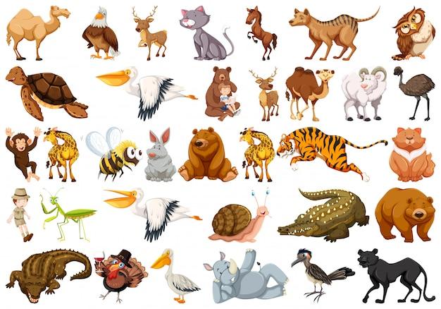 Conjunto de animal salvaje vector gratuito