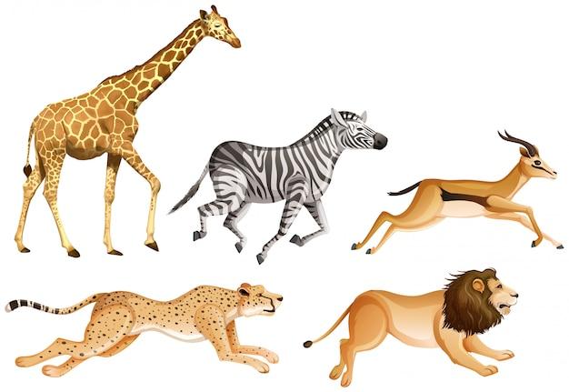 Conjunto de animales de safari aislado vector gratuito