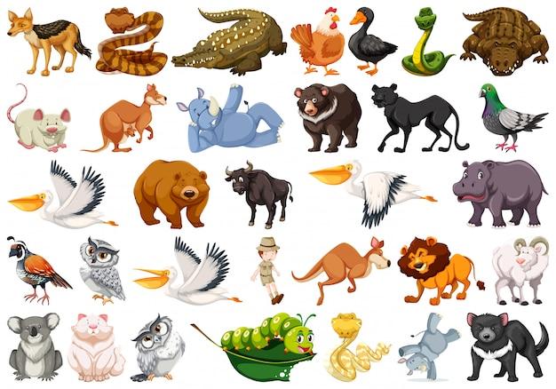 Conjunto de animales salvajes vector gratuito