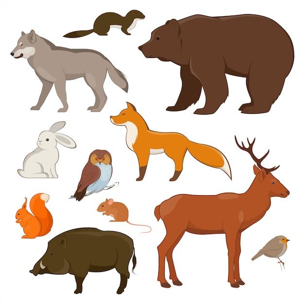 Conjunto de aves y animales salvajes del bosque. ilustración Vector Premium