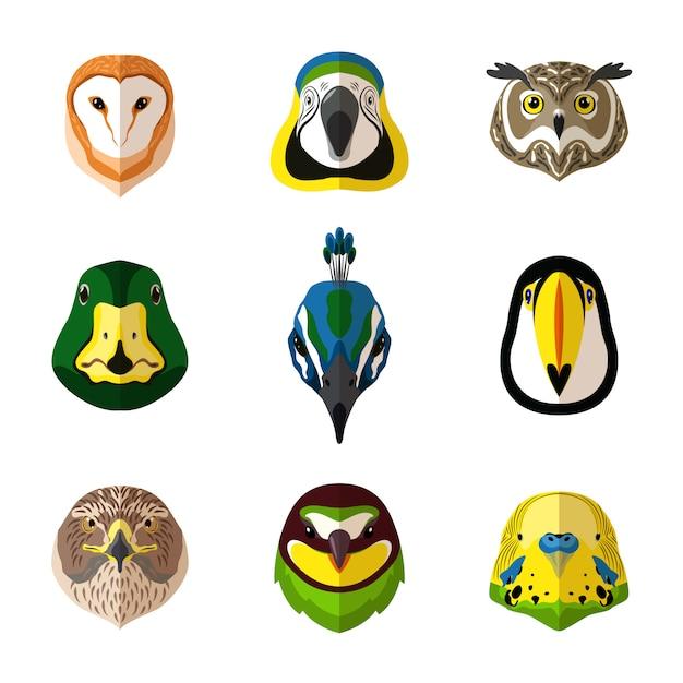Conjunto de aves silvestres Vector Premium