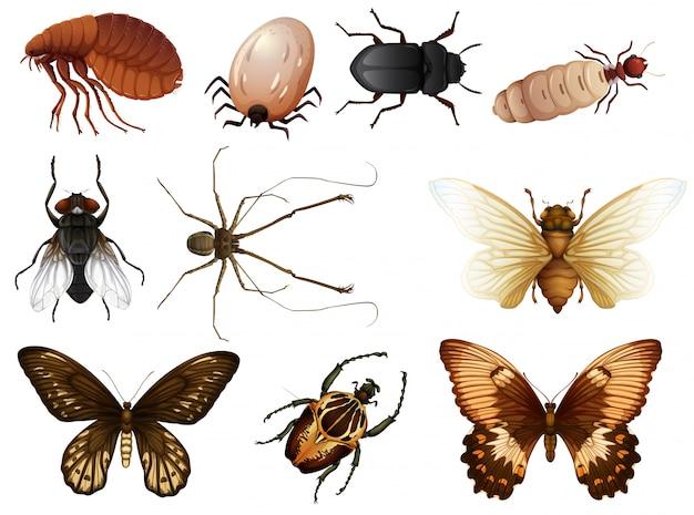 Conjunto de bichos e insectos vector gratuito