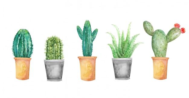 Conjunto de cactus floral acuarela Vector Premium
