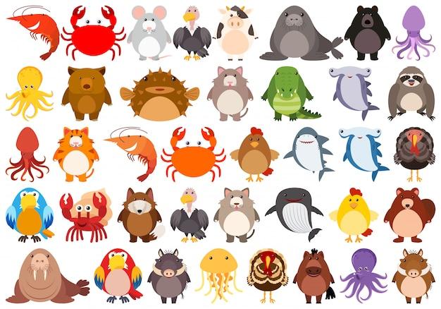 Conjunto de carácter animal lindo vector gratuito