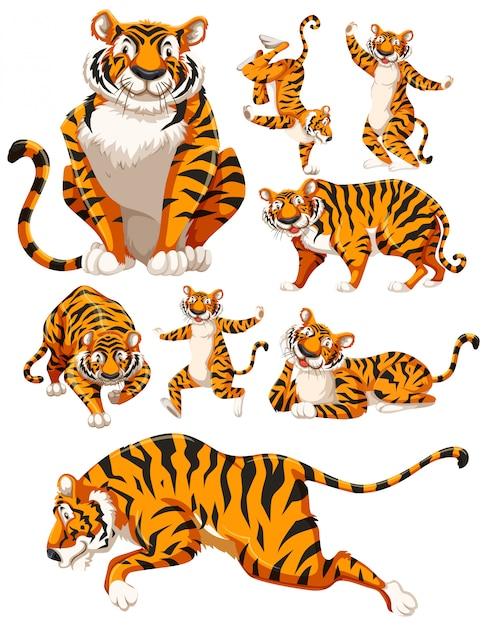 Conjunto de caracteres de tigre vector gratuito
