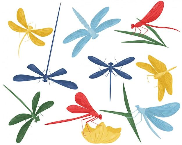 Conjunto de coloridas libélulas. pequeñas criaturas voladoras con cuerpo largo y dos pares de alas. insecto depredador Vector Premium