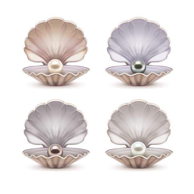 Conjunto de concha abierta con perlas de color beige, gris, marrón y blanco en su interior. plantilla de conchas marinas abiertas aisladas sobre fondo Vector Premium