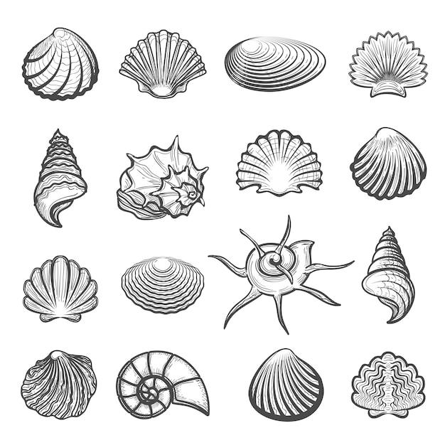 Conjunto de concha de mar dibujado a mano Vector Premium