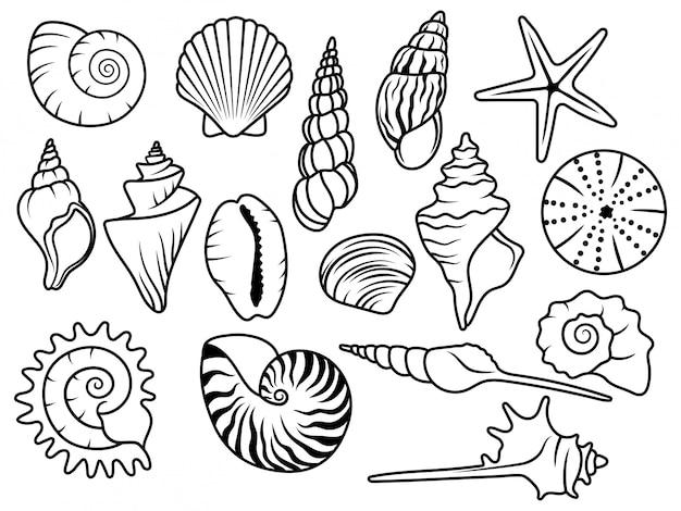 Conjunto de conchas marinas. colección de conchas marinas con perlas. ilustración vectorial Vector Premium