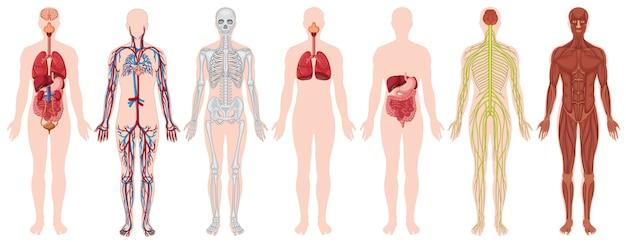 Conjunto de cuerpo humano y anatomía. vector gratuito