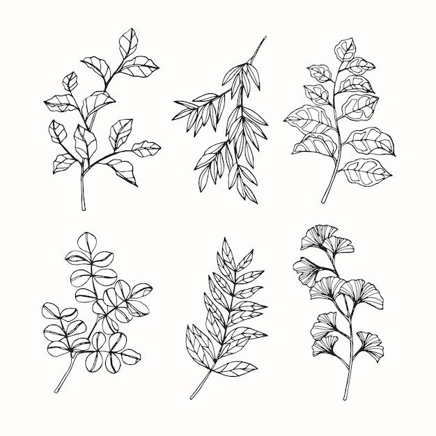 Conjunto de colección de hojas tropicales dibujo ...