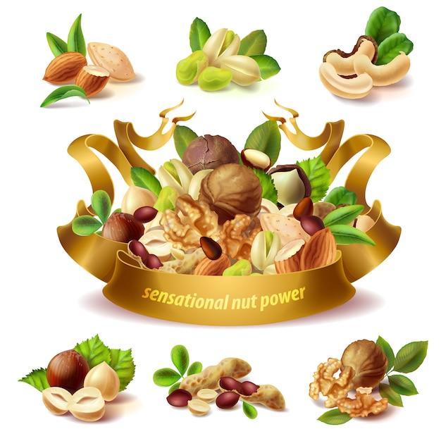 Conjunto de diferentes frutos secos, avellanas, cacahuetes, almendras, pistachos, nueces, anacardo vector gratuito