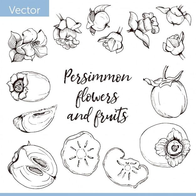 Conjunto de elementos. flores de caqui y frutas. dibujo grafico monocromo Vector Premium