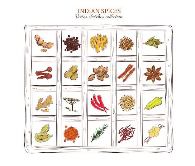 Conjunto de especias indias de bosquejo coloreado vector gratuito