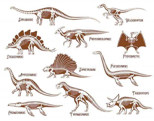 Conjunto de esqueleto de dinosaurios vector gratuito
