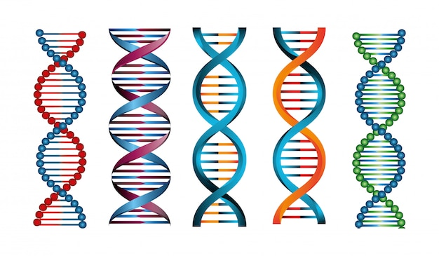 Conjunto de estructuras de ácido desoxirribonucleico vector gratuito