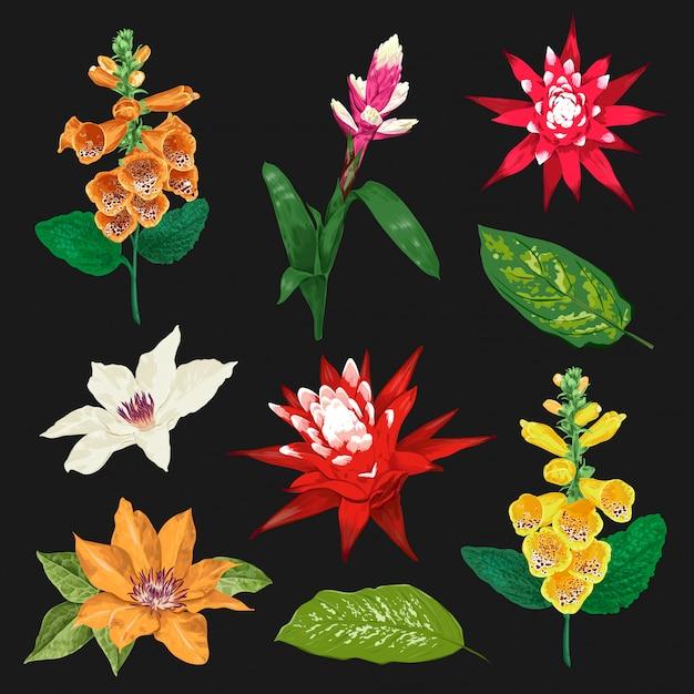 Conjunto de flores y hojas tropicales. colección floral exótica. diseño botanico Vector Premium