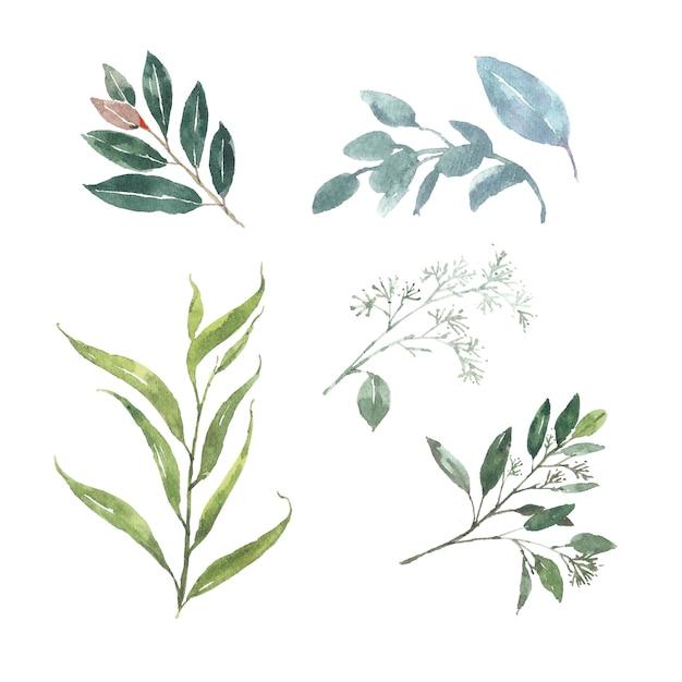 Conjunto de follaje de acuarela, ilustración de elementos aislados en blanco. vector gratuito