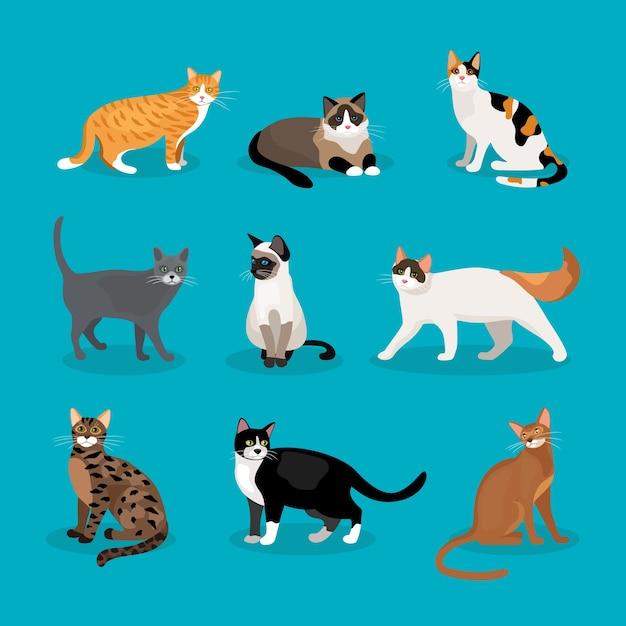 Conjunto de gatos vectoriales que representan diferentes razas y color de piel de pie sentado y caminando sobre un fondo azul vector gratuito