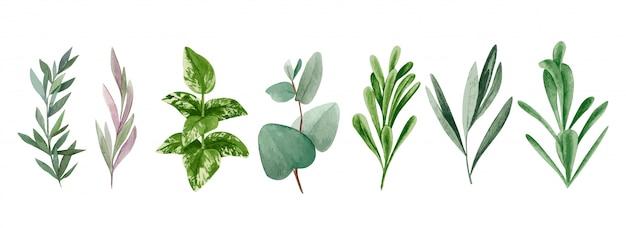 Conjunto de hojas y ramas de acuarela, colección de vegetación dibujada a mano Vector Premium
