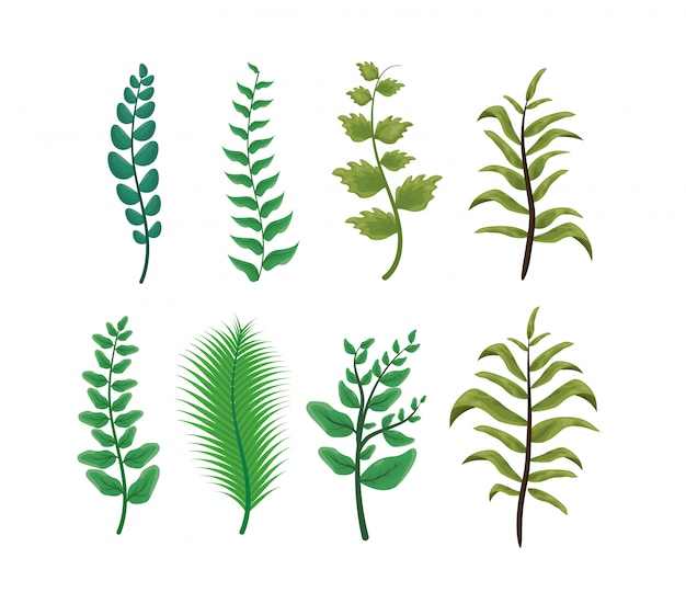 Conjunto de hojas verdes sobre blanco, naturaleza vector gratuito