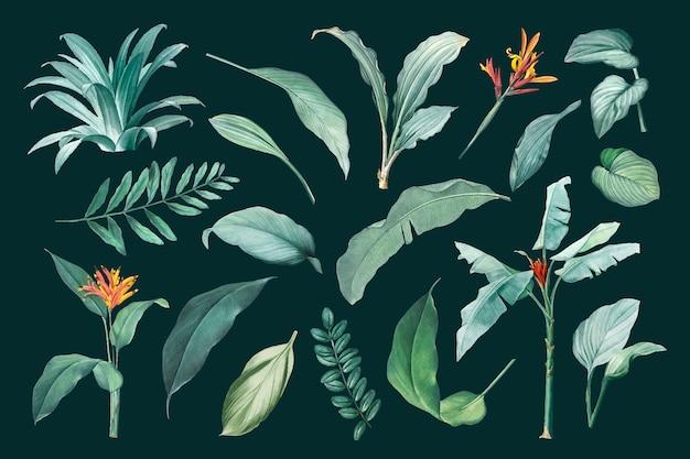 Conjunto de hojas vector gratuito