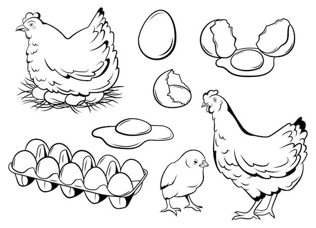 Conjunto De Huevos De Gallina Colección De Pollo Con Su Bebé Avicultura Natural Rural Vector Premium