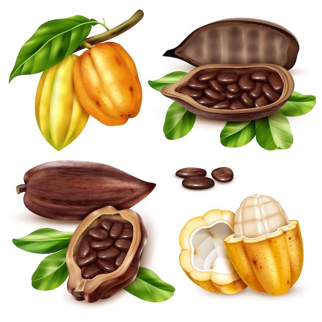 Conjunto de iconos de cacao realista vector gratuito