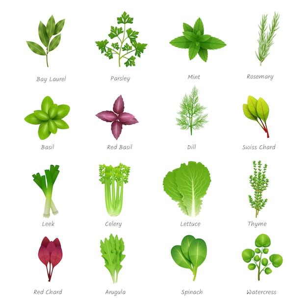 Conjunto de iconos de diferentes hierbas especiales vector gratuito